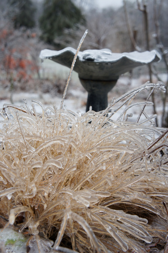 ice on grass, robin's house