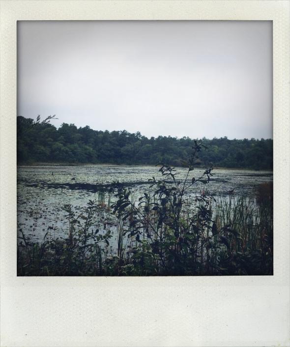 Skunkett Audubon Refuge, Osterville