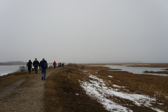 On the way to see snowy owls at Plum Island
